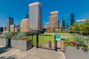 SODO amenities - dog park
