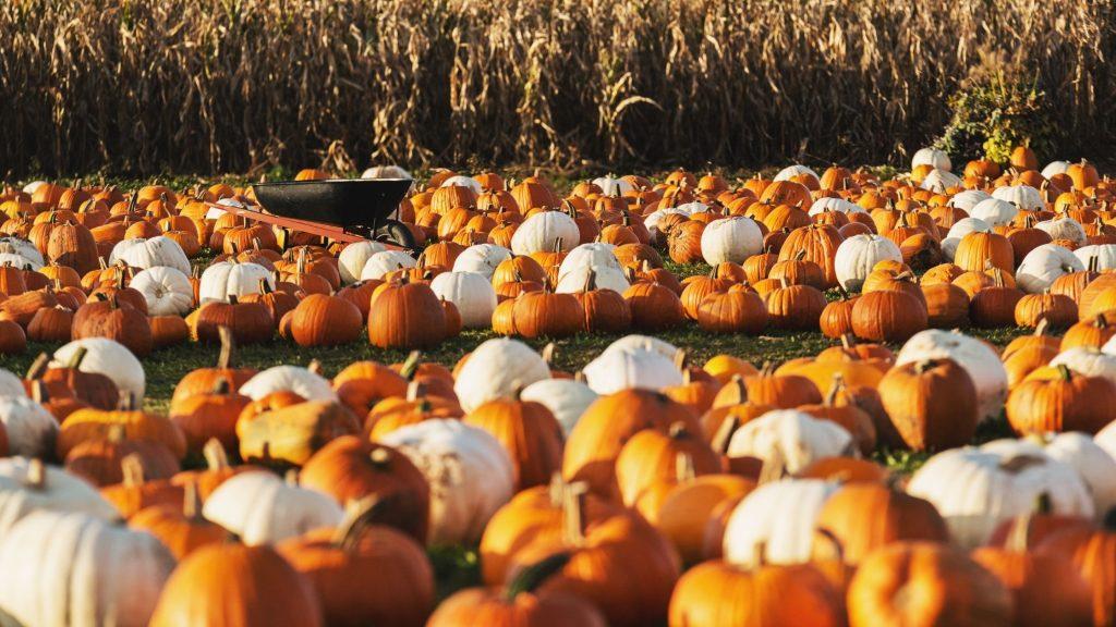 Pumpkin Picking Farm Near Me